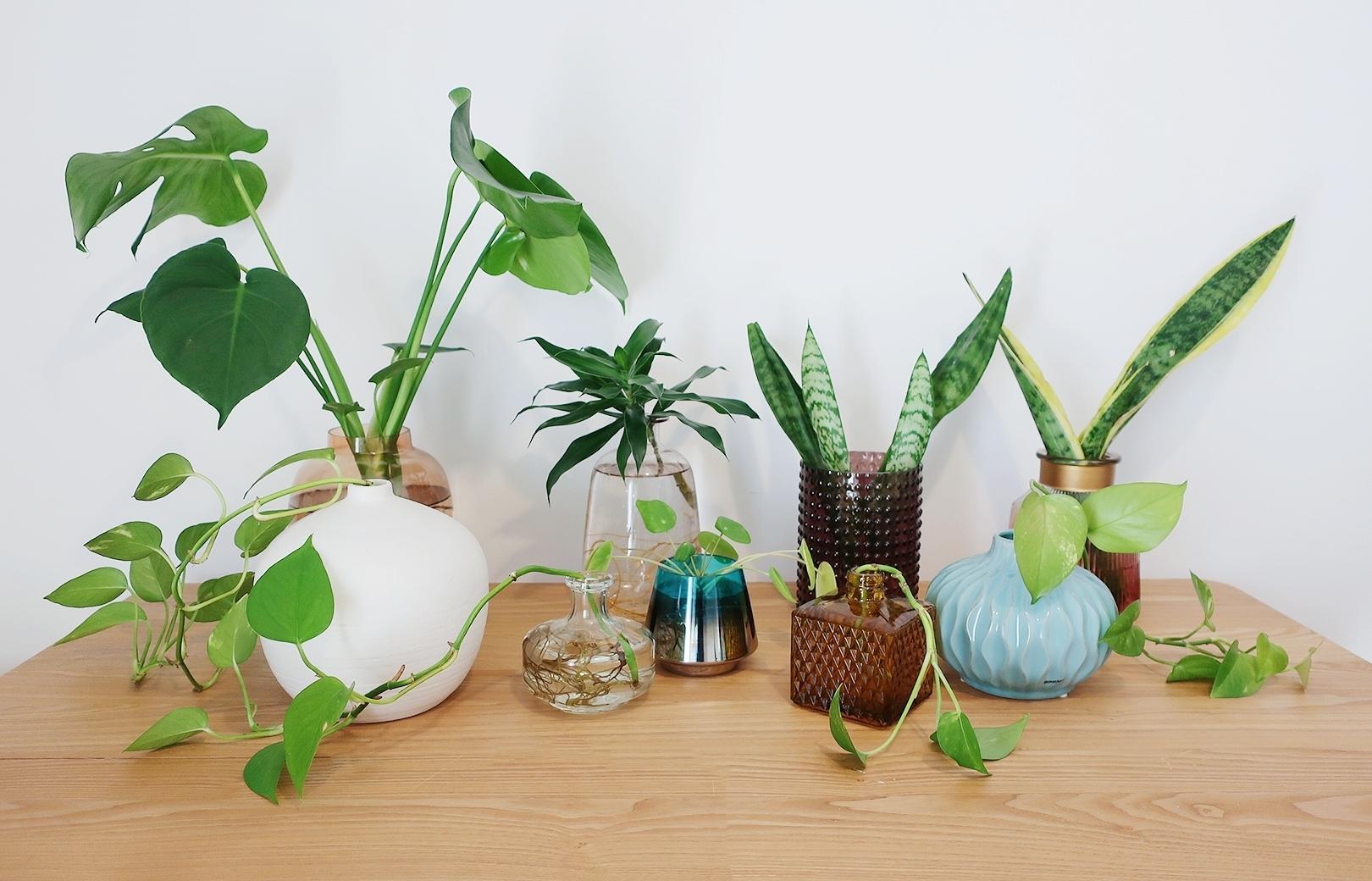 Best Indoor Plants You Can Grow In Water   Linlin Interiors
